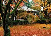 日本财团携手地方寺院 向外国游客提供寺院体验项目