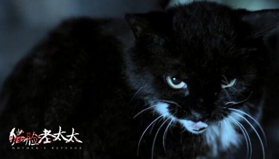 壁纸 动物 猫 猫咪 小猫 桌面 575_328