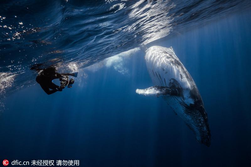 摄影师印度洋水下冒险拍摄座头鲸英姿
