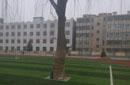 曝甘肃某中学足球场内留2棵树 网友:可跟树配合