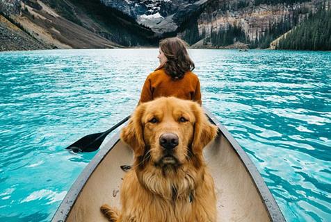 宠物跟随主人外出旅行走红网络引效仿