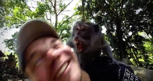 印尼森林公园内猴子欲咬伤游客脸