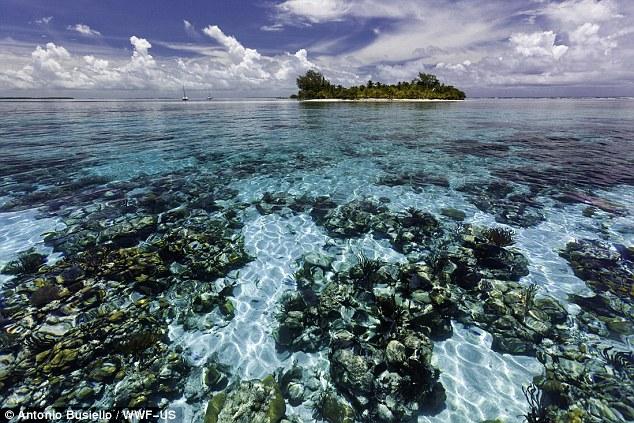 WFF报告:过半世界自然遗产面临消失风险