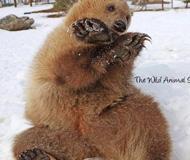 美国科罗拉多 滑雪之余还能看野生动物