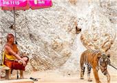 盘点:可与食肉动物亲密的体验式动物园