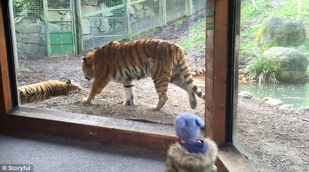 两岁小女孩模仿老虎吼叫 闻真声吓坏逃跑