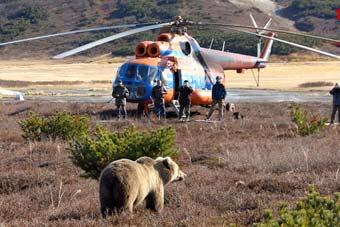 俄罗斯狗熊闻航空煤油上了瘾