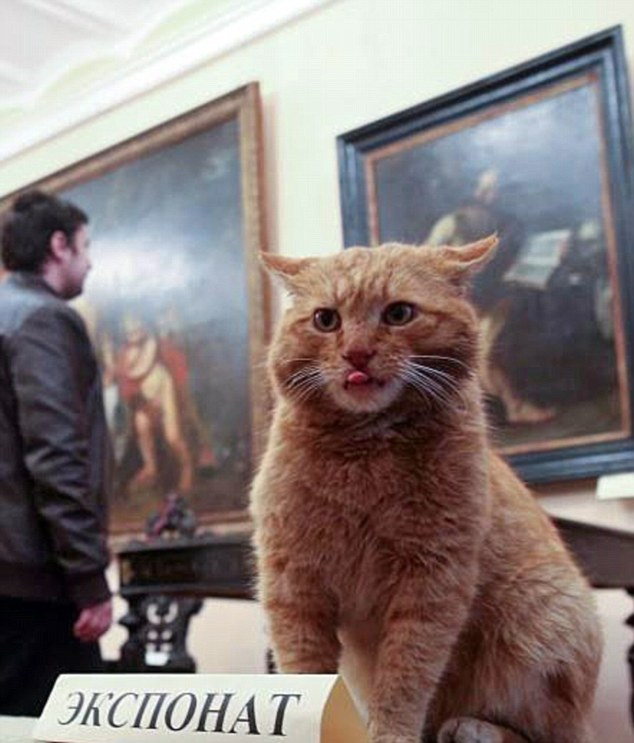 俄博物馆雇佣猫咪当门卫