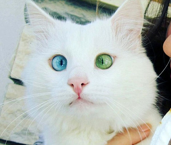 Who Is The Prettiest Warrior Cat