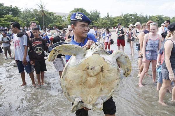 印尼海警营救并放生31只走私珍稀大海龟