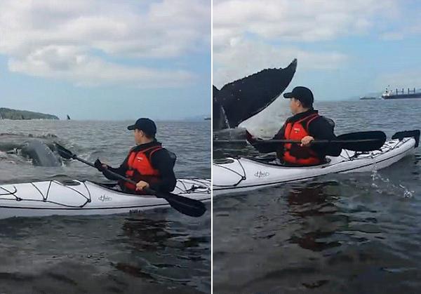 加男子划独木舟时遇鲸鱼摆尾向其打招呼