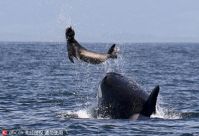 鲸的结构图片