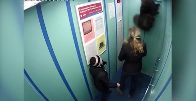 俄宠物犬误闯电梯因牵狗绳被夹险些送命