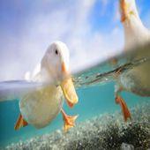 水面边际视角拍出新世界
