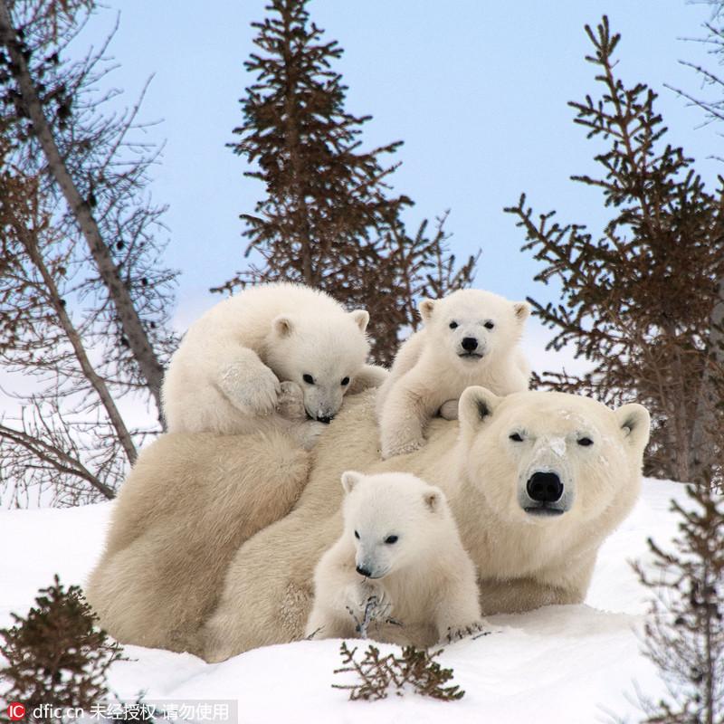 雪地里玩耍的可爱图片