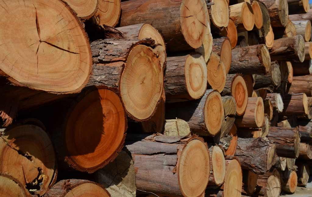神奇新材料,透明的木头见过吗