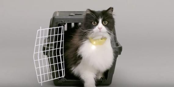 感受喵星人的世界 能让你听懂猫叫的项圈