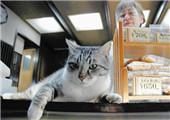 日本猫咪店长人气旺 卖萌揽客还能带来好运