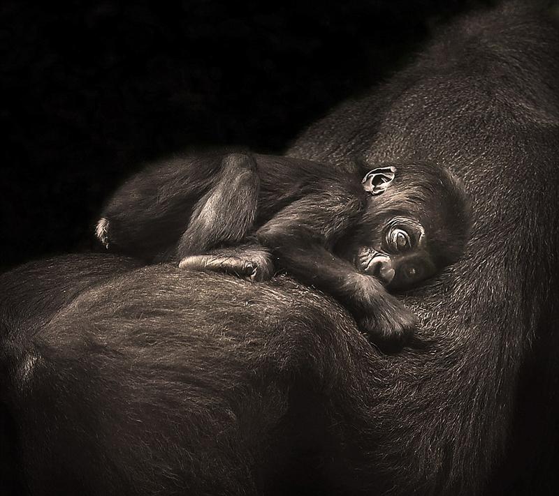 澳摄影师拍摄世上最濒危物种亲密时刻