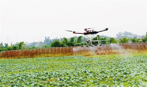 植保机助阵兵团农业