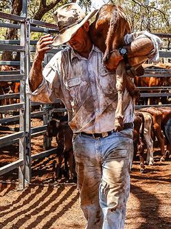 澳牧民为躲避干旱携家畜赶赴市内找水