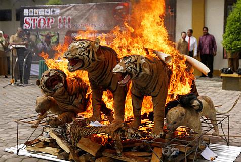 印尼销毁珍稀动物制品 打击非法交易