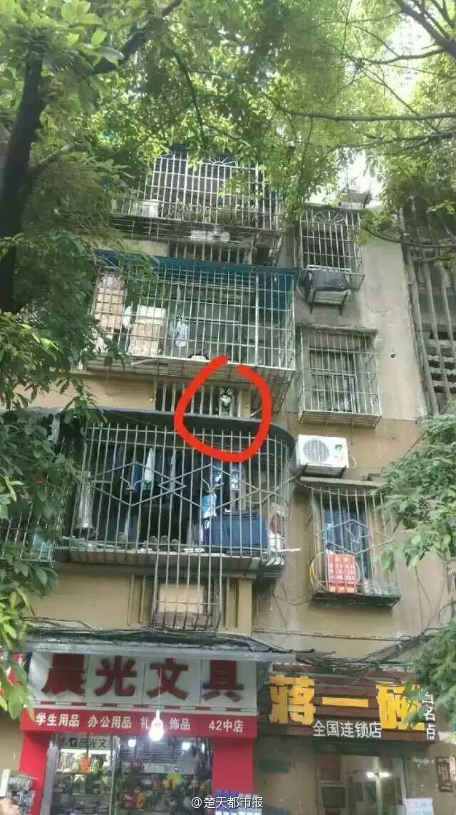 重庆失足坠楼被挂电缆那只哈士奇 头又被护栏卡住了