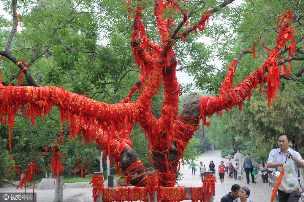 """高考临近 济南古树缠满红绳成""""许愿树"""""""