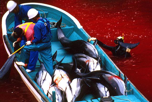 贪婪的杀戮:全球猎杀动物残忍行径
