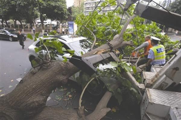 路边大树倒地 刚买5天的保时捷被砸中