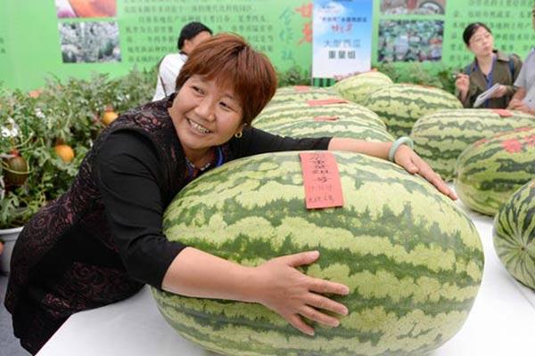"""第28届北京大兴西瓜节 """"瓜王""""体重79.96公斤"""