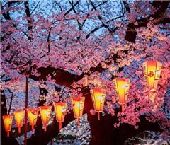 日本:又是一年春樱盛开时