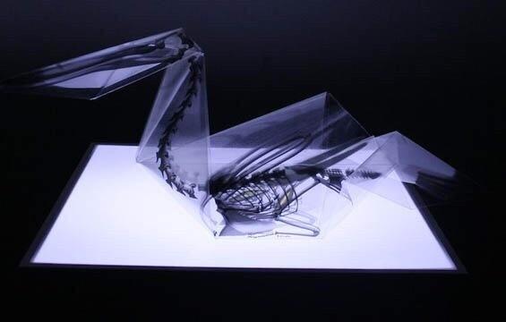 小山带你看:对折纸折出解剖结构透明模型