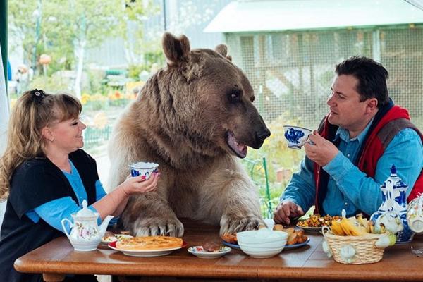 这对夫妇和23岁大熊同桌进餐