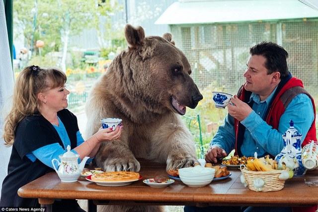 俄罗斯夫妇养23岁大熊 每日同桌进餐
