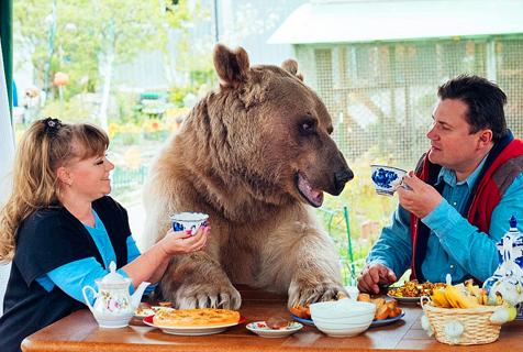 俄罗斯夫妇收养巨型棕熊