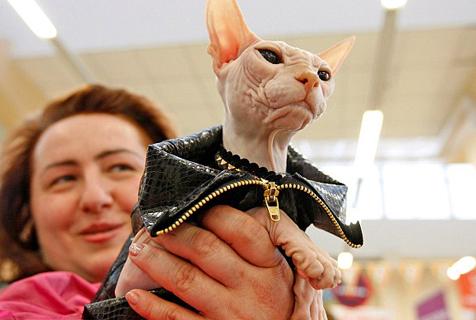 闪亮走秀:稀有猫咪盛装亮相乌克兰