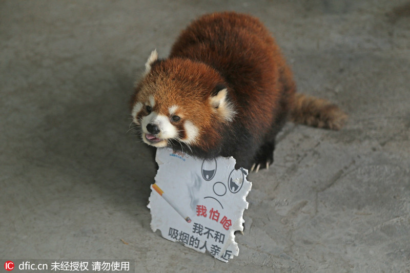 """重庆:呆萌动物做代言 """"举牌""""宣传世界无烟日"""