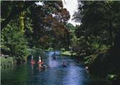 雅芳河畔的绿色基督城藏着本土基因