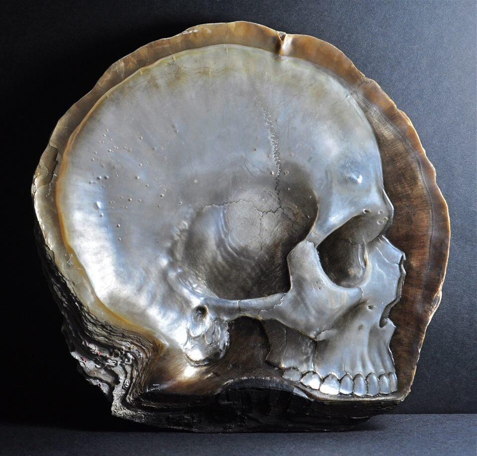 """小山带你看:用贝壳雕刻成的""""头骨""""(图)"""