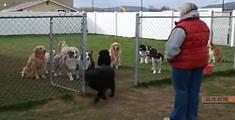萝莉说趣事 :动物和人们的羞羞事儿