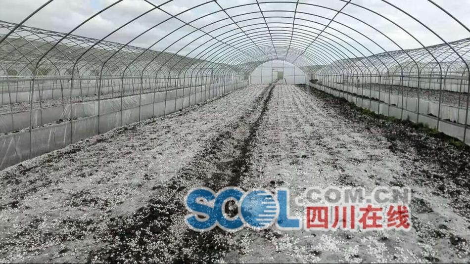 汤圆大冰雹袭击阿坝红原县城(图)