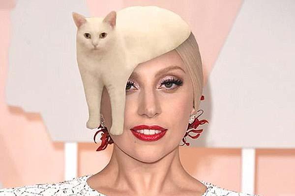 猫咪奇异姿势被玩坏 网友疯狂PS