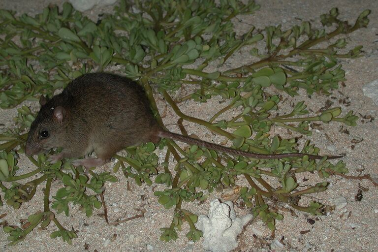 变化灭绝的啮齿类动物