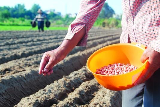 不再抬头看天!这款App告诉印度农民何时播种