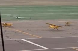 一阵妖风吹来 飞机纷纷自己起飞跑了