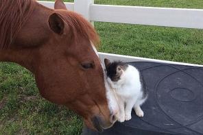 萌化!美农场猫咪和马儿相伴相随形影不离