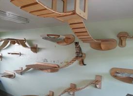 德家具设计师打造完美宠物猫运动设施