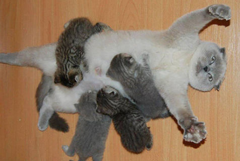 动物界的劳模妈妈