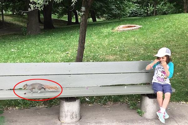 城会玩!加拿大一父亲用松鼠帮女儿拔牙